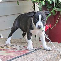 Adopt A Pet :: FALLON - Hartford, CT