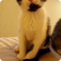 Adopt A Pet :: Nosfuratu - Fort Collins, CO