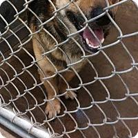 Adopt A Pet :: Stretch - ADOPTED! - Zanesville, OH