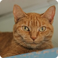 Adopt A Pet :: Tangerine - Indianapolis, IN
