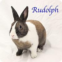 Adopt A Pet :: Rudolph - Bradenton, FL