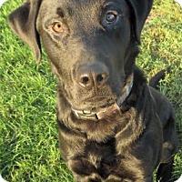 Adopt A Pet :: Farkle - Waupaca, WI