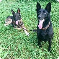 Adopt A Pet :: Ciera - Anderson, SC