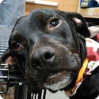 Adopt A Pet :: Emme - Winder, GA