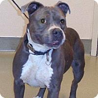 Adopt A Pet :: 334225 - Wildomar, CA