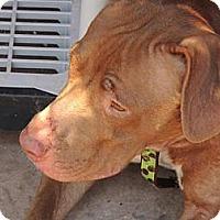 Adopt A Pet :: Mercy - Pomerene, AZ