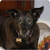 Adopt A Pet :: Moss *Foster* - Glen Allen, VA