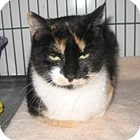 Adopt A Pet :: Violet - Shelton, WA