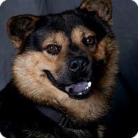 Adopt A Pet :: Diesel - Carlisle, TN