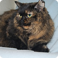 Adopt A Pet :: Salem - Ridgway, CO