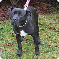 Adopt A Pet :: CODY - McKinleyville, CA