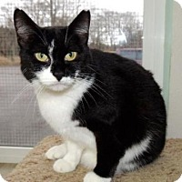Adopt A Pet :: Carrie - Long Beach, WA