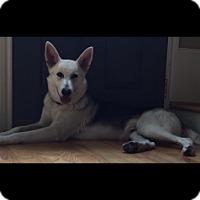 Adopt A Pet :: Tux - Houston, TX