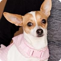Adopt A Pet :: Gladys - Mesa, AZ