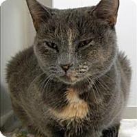Adopt A Pet :: Zero - Topeka, KS