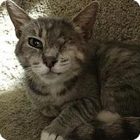 Adopt A Pet :: Rita - Pleasant Hill, CA