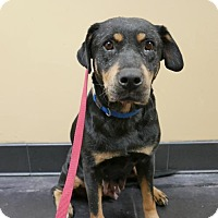 Adopt A Pet :: Canela - Courtesy Post - San Diego, CA