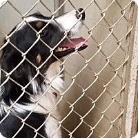 Adopt A Pet :: SILO - Gustine, CA
