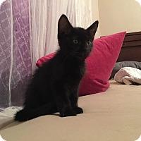 Adopt A Pet :: Cap'n  Crunchy - Overland Park, KS