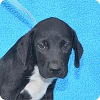 Adopt A Pet :: **RAJ** MEET SEPT 24TH! - Mukwonago, WI