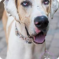Adopt A Pet :: Woogie - Huntersville, NC