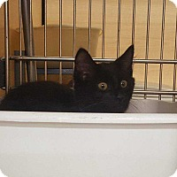 Adopt A Pet :: Spectre (Gilmer 6) - Acworth, GA