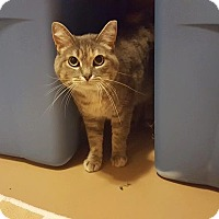Adopt A Pet :: Bandit - Rochester, MN