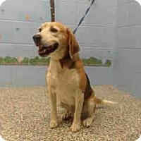 Adopt A Pet :: URGENT ON 11/1  San Bernardino - San Bernardino, CA