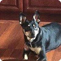 Adopt A Pet :: BISCUIT - Hampton, VA