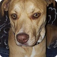 Adopt A Pet :: TATER - Coeburn, VA