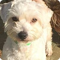 Adopt A Pet :: Winston - Vacaville, CA