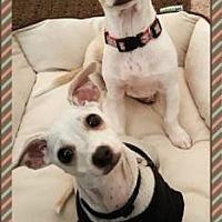 Adopt A Pet :: Donny - Scottsdale, AZ