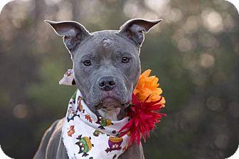 Terrier (Unknown Type, Medium) Mix Dog for adoption in Flint, Michigan - Krissy