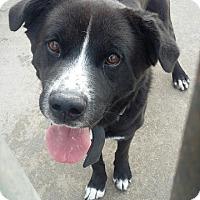 Adopt A Pet :: Sam - Minneapolis, MN