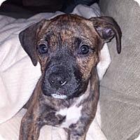 Adopt A Pet :: Monty - Pacific Grove, CA