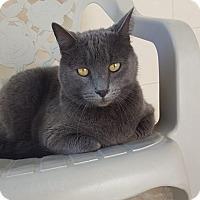Adopt A Pet :: Cleopatra - Umatilla, FL