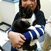 Adopt A Pet :: Piggy - Pasadena, CA