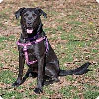 Adopt A Pet :: Tyrogue, a/k/a Buddy - Atlanta, GA