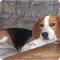 Adopt A Pet :: Devin - Novi, MI