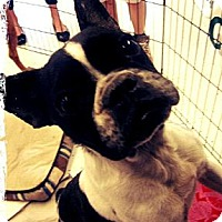 Adopt A Pet :: Pugsley - Beaumont, TX