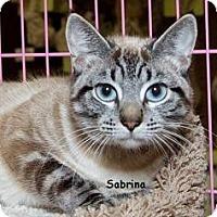Adopt A Pet :: Sabrina M - Sacramento, CA