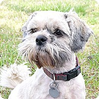 Adopt A Pet :: Lucy Loo - Mocksville, NC