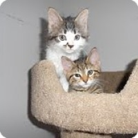 Adopt A Pet :: Scotty & Timmy - Arlington, VA