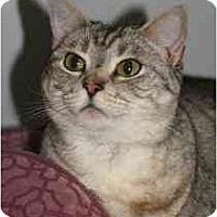 Adopt A Pet :: Quinn - Marietta, GA