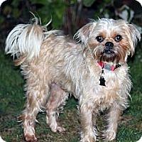 Adopt A Pet :: Missy - Lynnwood, WA