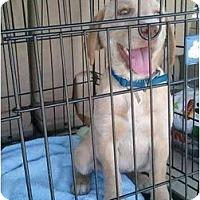 Adopt A Pet :: Covergirl - Cumming, GA