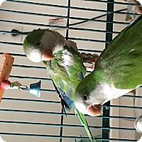 Adopt A Pet :: Sweetie - Punta Gorda, FL