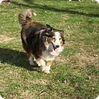 Adopt A Pet :: Tessa - Circle Pines, MN