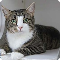Adopt A Pet :: Patterson - Merrifield, VA