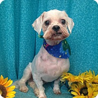 Adopt A Pet :: Shaggy-Courtesy Post - Acushnet, MA